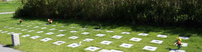 Askgravplats Begravningsbyrå Caelum